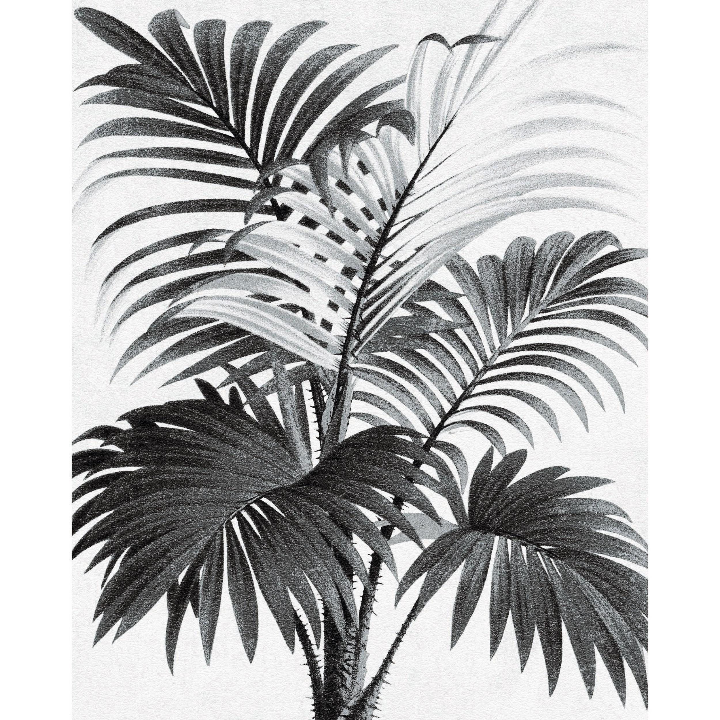 acheter porter 40 x 50 noir blanc palmier