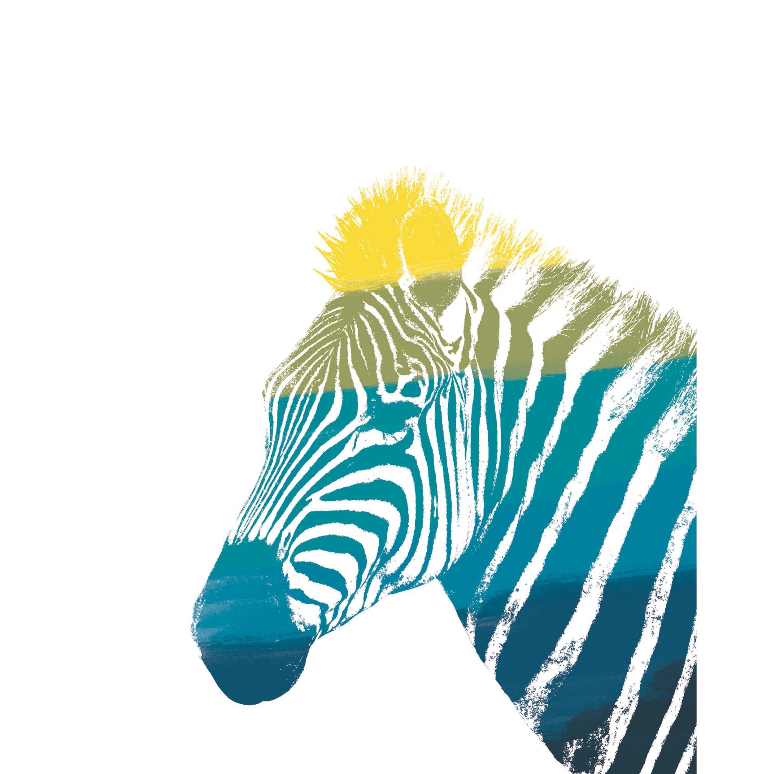 acheter poster 40 x 50 zebre