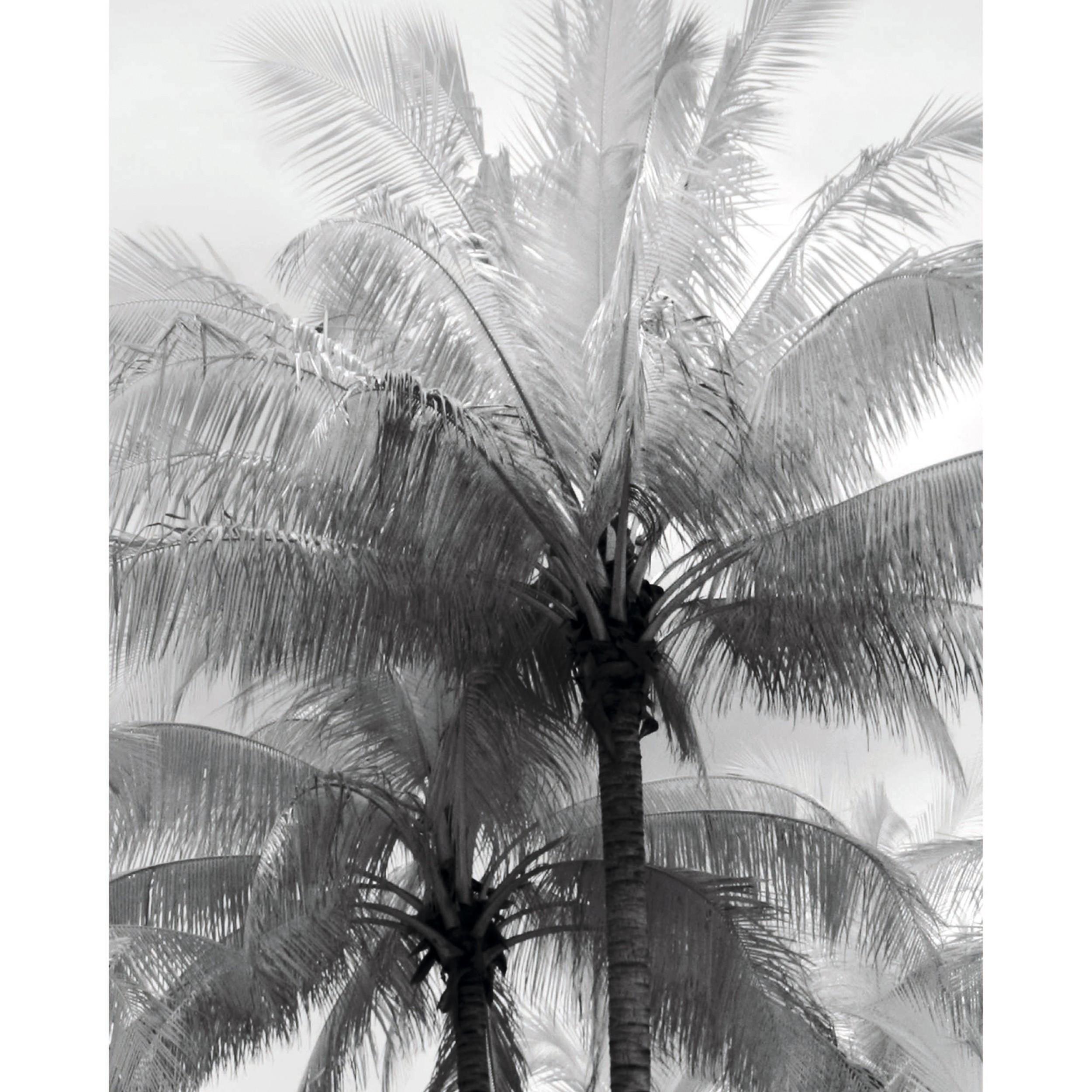 acheter poster palmier 40 x 50 noir blanc