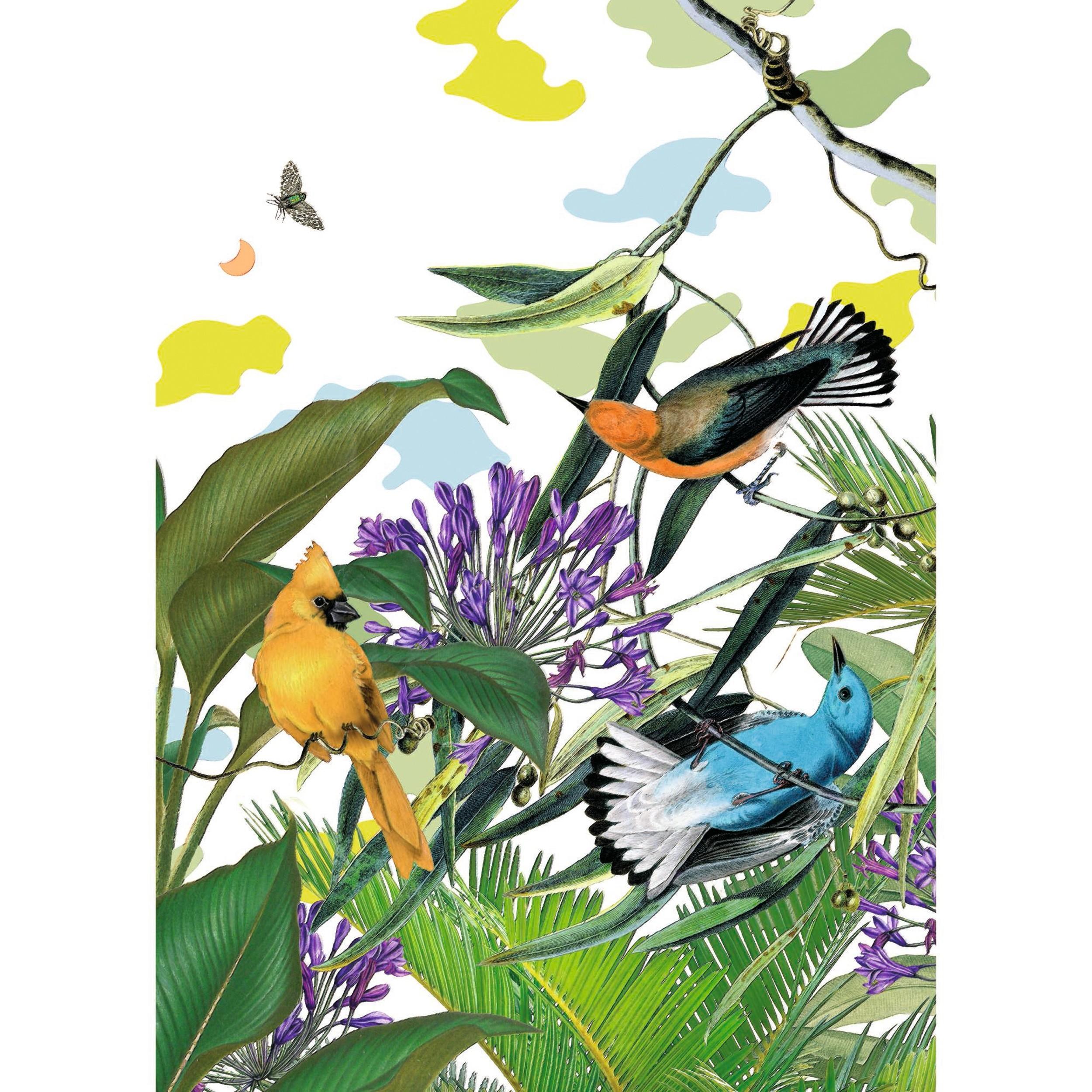 acheter poster papier 50 x 70 oiseaux