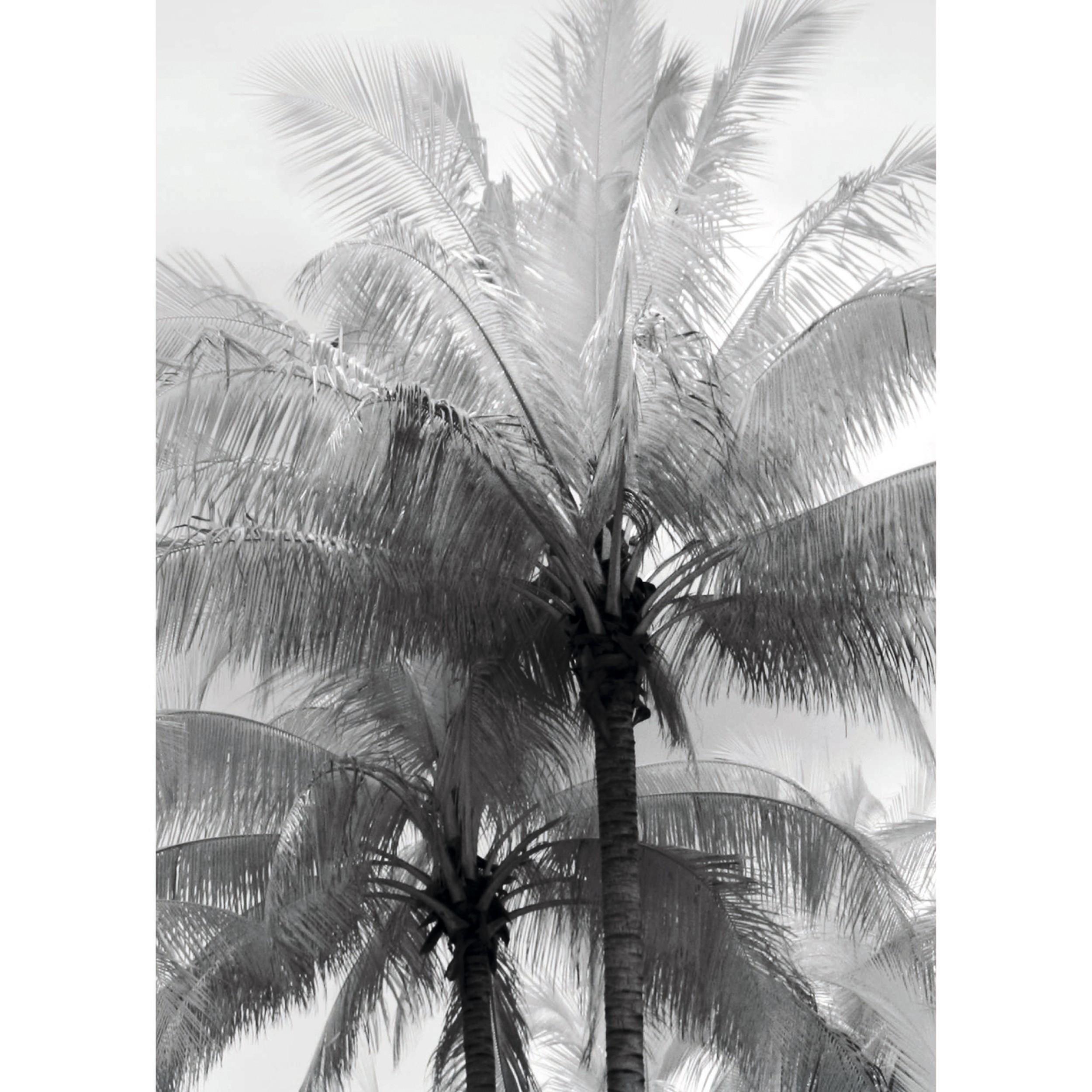 acheter poster papier 50 x 70 palmier