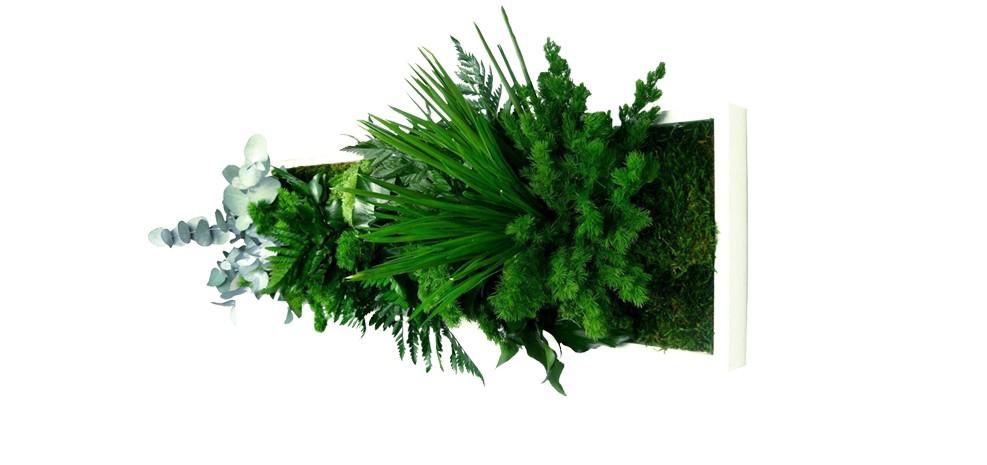 grand cadre végétal blanc panoramic 2