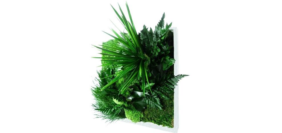 grand cadre vegetal blanc 2