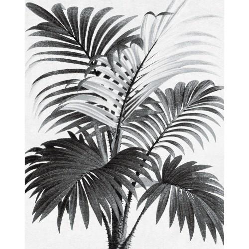 Poster Palmi en papier 40 x 50 cm