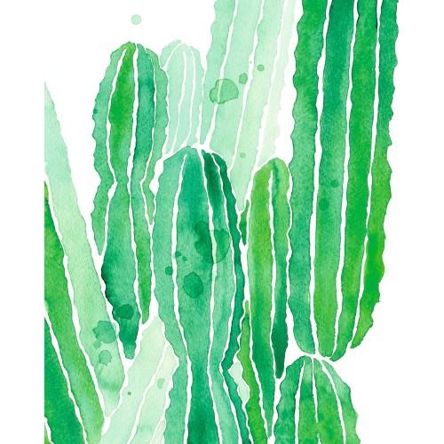 acheter poster 40 x 50 cm cactus vert
