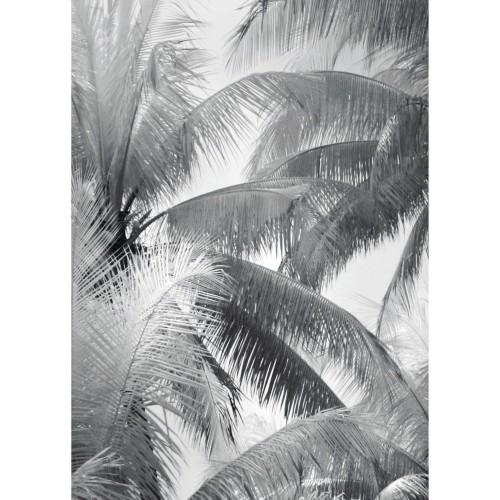 acheter poster 50 x 70 cm noir blanc herbi