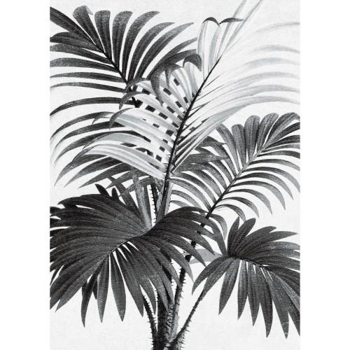 acheter poster palmier noir blanc 50 x 70