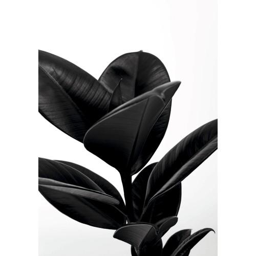 acheter tableau noir et blanc plante tocoa