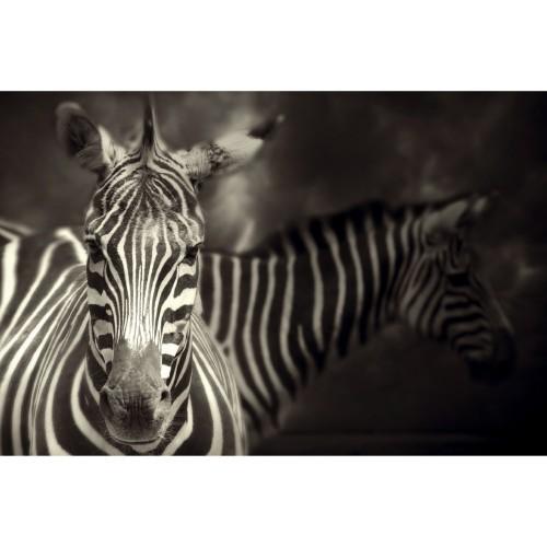 acheter tableau zebre en verre 90 x 60
