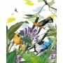 acheter poster 40 x 50 en papier oiseau