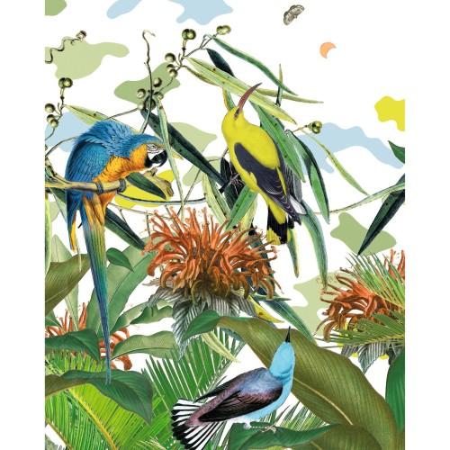 acheter poster papier oiseaux 40 x 50 cm