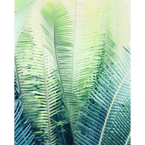 acheter poster papier palmito 40 x 50