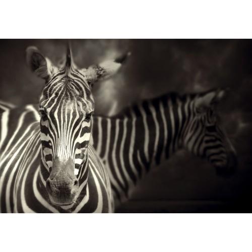 acheter tableau en verre zebre noir et blanc